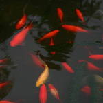 Fish Family.