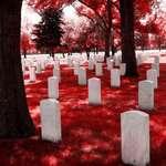 Pure White Souls Meet Crimson Death