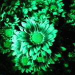 Green Mum
