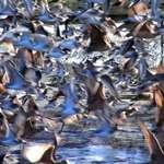 Bird Riot