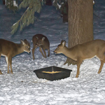 Guests for Dinner