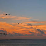 Gulls Soaring Above Dawn