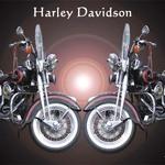 Harley 6