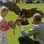 Blaze Hawk