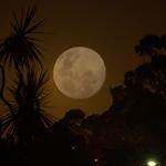 Harvesters Moon
