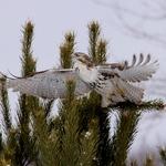 Hawk Blast Off