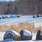 Hay in Field Over Winter