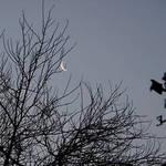 High Moon Sunrise