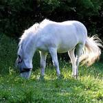 Horse in leaves