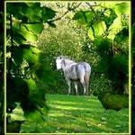 Horse through leaves