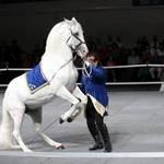 Horse Half Rear