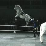 Horse Leap!