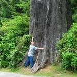 Little Tree Hugger Me