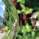 Hummingbird Angel & Gazing Ball