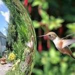 Hummingbird & Gazing Ball
