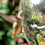 """Hummingbird """"Mirror Mirror in the Ball"""", who is the fairest of them all?"""