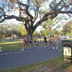 Oak Tree at Audubon Park
