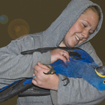Hyacinth Macaw