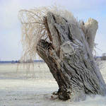 Icy Stump