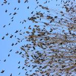 The Birds 3
