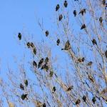 The Birds 4