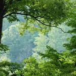 Indiana Big Walnut Reserve