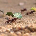Hard Working Ants