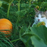 isis and the pumpkin