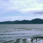 Kapiti Island