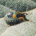 Itty Bitty Bug
