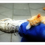 Kitten On A Leg