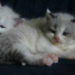 Sleepy Siblings