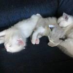 Kittens Corner