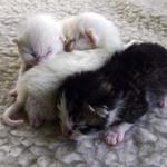 Moggies Babies