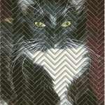 Herringbone Kitty