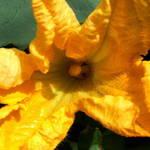 KumiKumi Flower