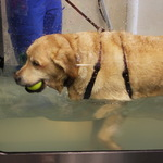 Lab Hydrotherapy, Lucy Walking Treadmill