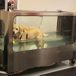 Lab's Hydrotherapy Session