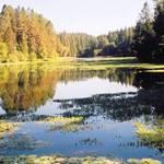 Lake Madrone 2