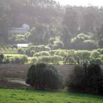 Misty Sunshine in Galicia
