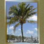 Coconut Palm over Marina at Matheson Hammock