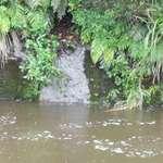 River Garden #2