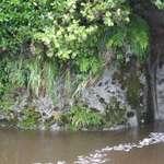 River garden #3