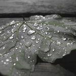 Leaf it Alone - It's Wet