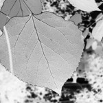 Inverted leaf
