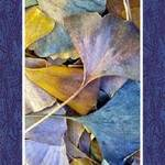 Ginko leaves 5