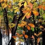 leaves in orange