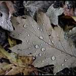Leaf in Dew
