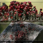 Lichen Stitch