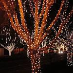 Christmas Lights in Arizona